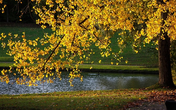 Wallpaper Yellow leaves, tree, autumn, pond, sunlight