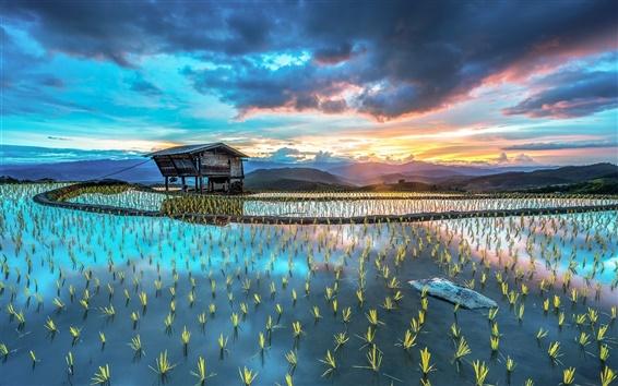 Hintergrundbilder Asien Bauernhof, Plantage, Reis, Hütte, schöne Landschaft