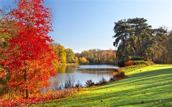 Обои Осенний парк, озеро, деревья, листья, природа пейзаж