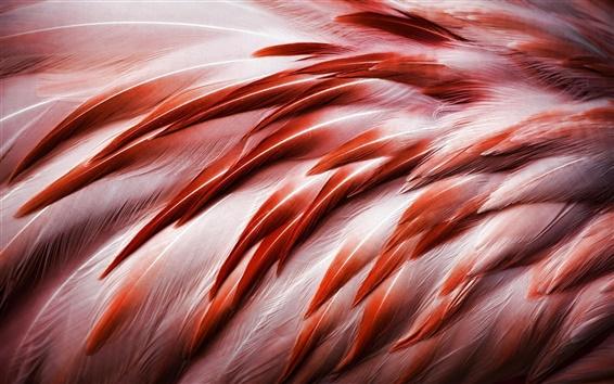 Papéis de Parede Pássaro, penas flamingo
