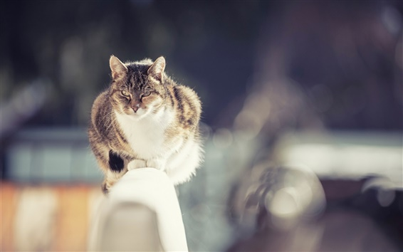 Wallpaper Cat, fence, winter