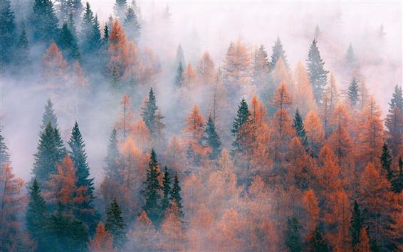 Wallpaper Forest, trees, fog, autumn