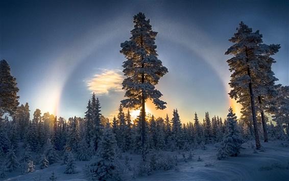 Fondos de pantalla Bosque, invierno, nieve, pinos, puesta del sol