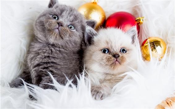 Обои Серый кот, белая кошка, новогодние шары