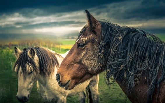 Обои Лошадь, облака, сумерки