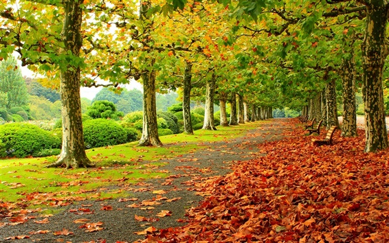 Wallpaper Park, trees, red leaves, road, bench