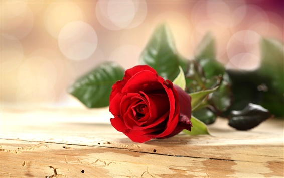 Wallpaper Red rose flower, wooden table, bokeh