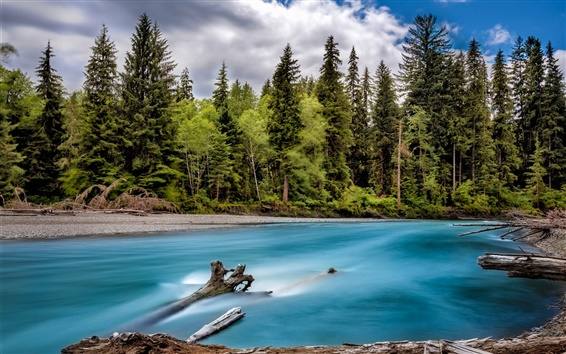 Wallpaper River, forest, trees, clouds, Washington, USA