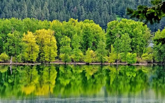 Papéis de Parede Rio, floresta, árvores, verde, reflexo da água