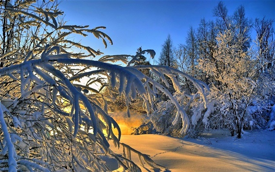 Papéis de Parede Thick neve, árvores, inverno, luz solar