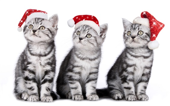 Wallpaper Three cats, kittens, Christmas hat