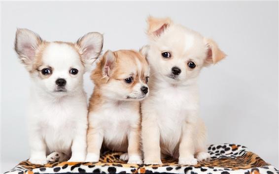 Обои Три собаки, милый