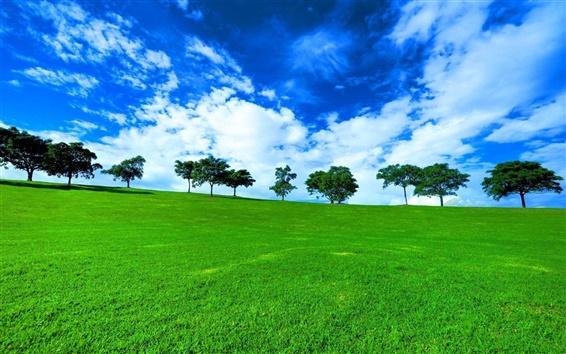 Wallpaper Trees, grass, fields, green
