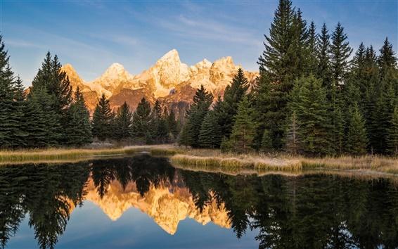 Wallpaper USA, Wyoming, Grand Teton National Park, trees, lake
