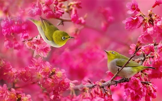Обои Белый глаз птицы, красные цветы, дерево