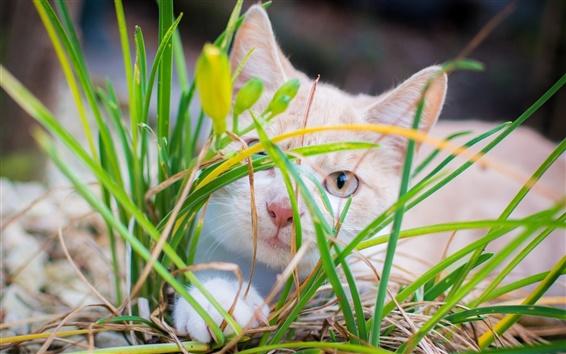 Обои Белый котенок скрыты в траве