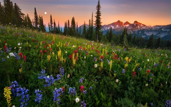 Wallpaper Wildflowers, mountains, sunset, nature landscape