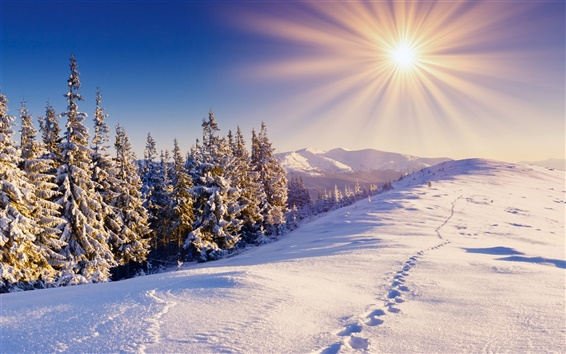 Wallpaper Winter, snow, forest, trails, mountains, sky, sun