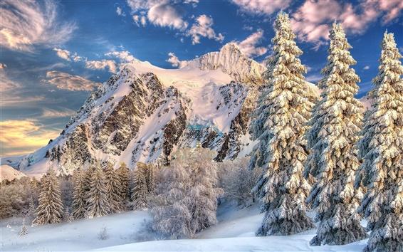 Fond d'écran Hiver, neige, ciel, nuages, montagnes, arbres, épinette