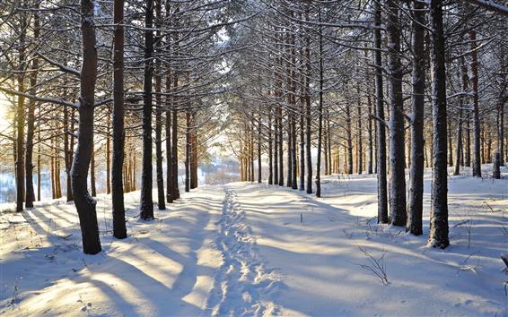 Fond d'écran Hiver, neige, arbres, forêt, route