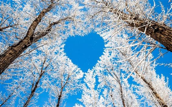 배경 화면 겨울, 나무, 눈, 흰색, 하늘, 사랑하는 마음