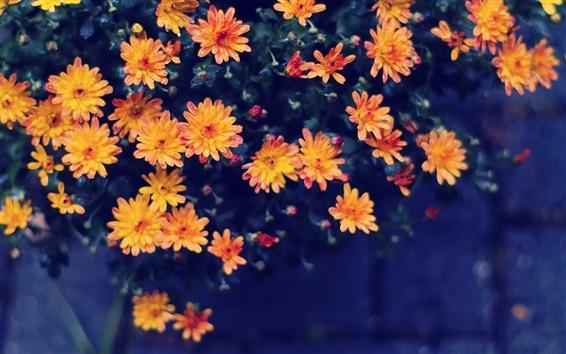 Fond d'écran Fleurs jaune orangé, bokeh