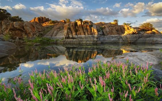 배경 화면 애리조나, 프레스콧, 왓슨 호수, 미국, 호수, 꽃, 돌