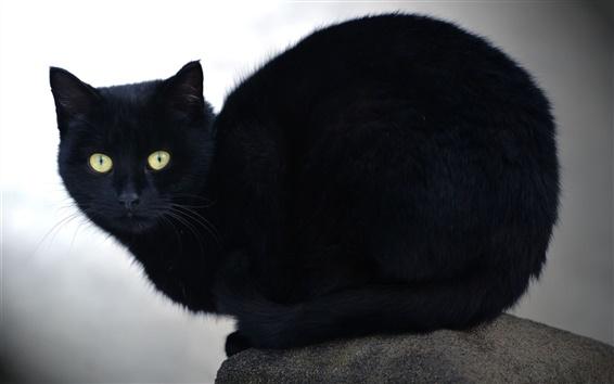 Обои Черная кошка, желтые глаза, камень