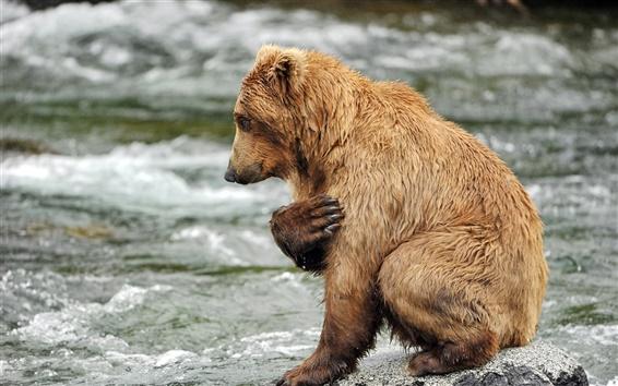 Обои Бурый медведь, вода, река, скалы