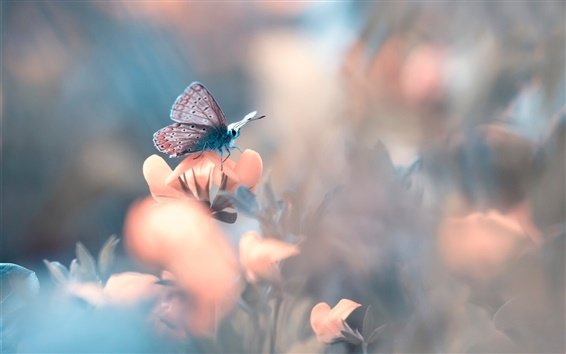 Wallpaper Butterfly, flower, bokeh