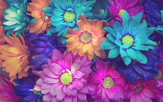 Wallpaper Colorful daisy flowers, pink, blue, orange