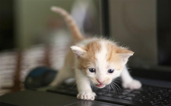 Обои Милый котенок, малыш, клавиатура