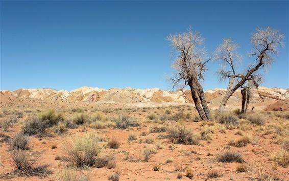 Papéis de Parede Desert, árvores, grama, céu