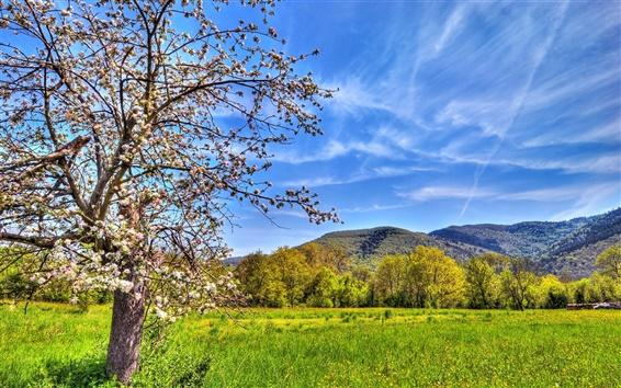 Fondos de pantalla Los campos, montañas, manzano, primavera, cielo