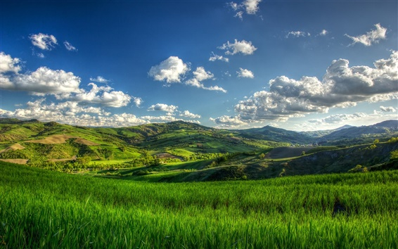 Wallpaper Hills, summer, green fields, tree, clouds