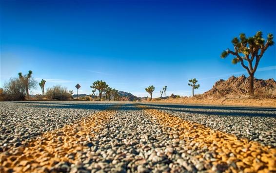 Wallpaper Joshua Tree National Park, California, USA, road, trees, sky