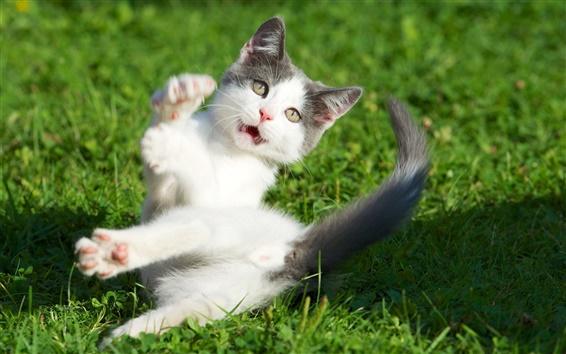 배경 화면 고양이 식을 놀라게 잔디