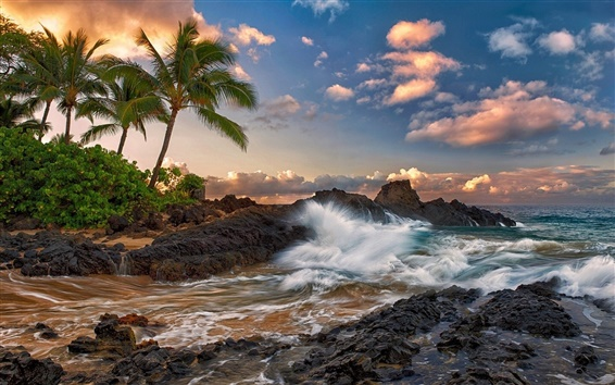 壁紙 マウイ島、ハワイ、静かな、海、岩、ヤシの木、ビーチ