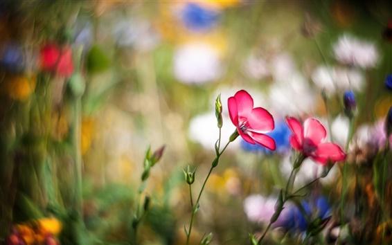 Fond d'écran Meadow, fleurs roses, bokeh