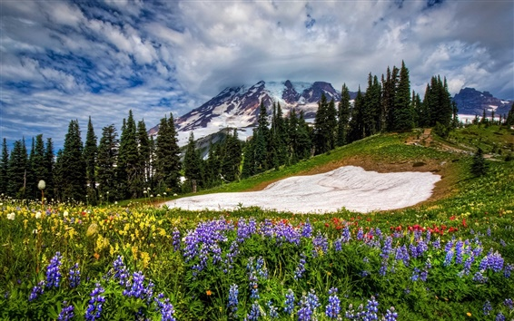 Wallpaper Mountains, flowers, sky, spring, grass