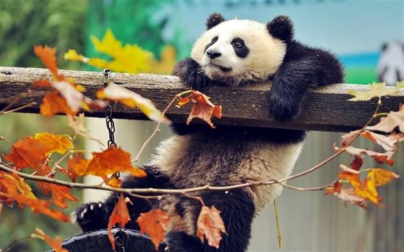 Wallpaper Panda playing, climb, autumn, leaves