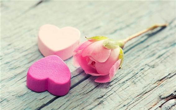 Wallpaper Pink rose flower, petals, love hearts