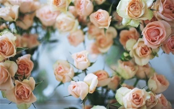 Papéis de Parede Rosa rosa flores