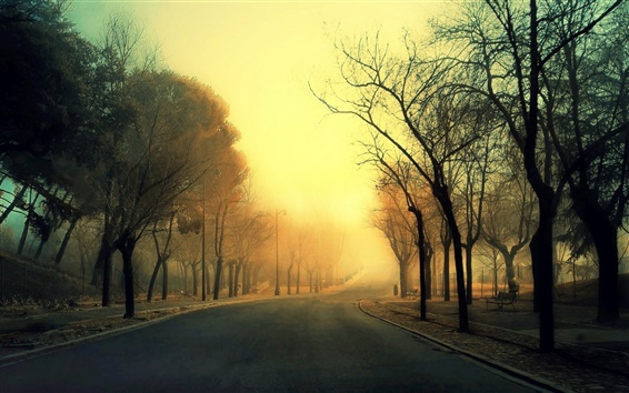 Wallpaper Road, trees, fog, morning