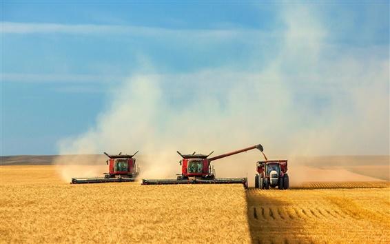 Обои Небо, поля, урожай, машина