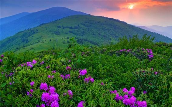 Wallpaper Sunset, mountains, flowers, grass, trees