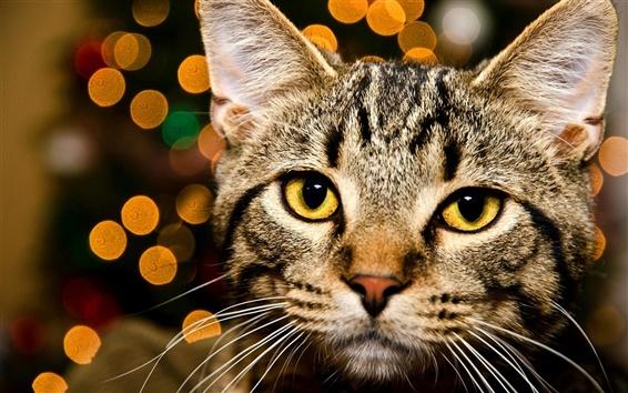Papéis de Parede Gato de gato malhado, olhos amarelos, bokeh, luzes