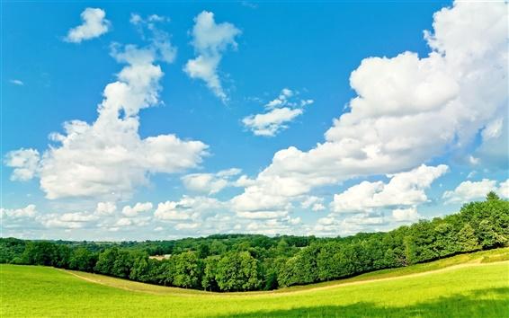 Обои Деревья, трава, голубое небо, белые облака, лето