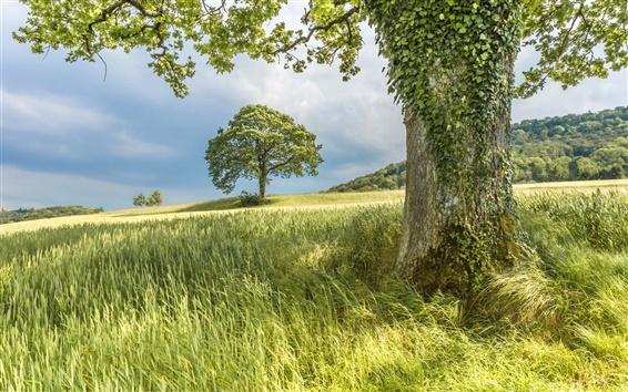 Обои Деревья, склон, трава, лето