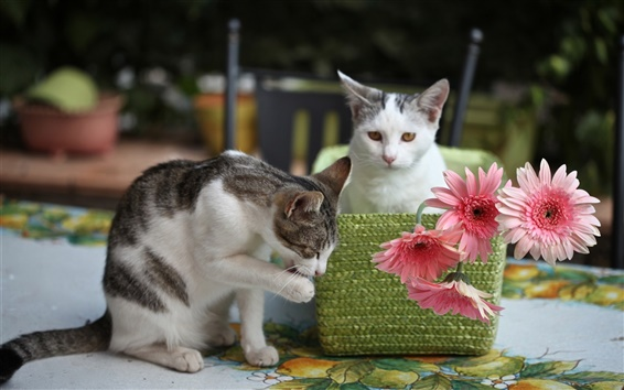 Fondos de pantalla Dos gatitos, flores de color rosa, gerbera